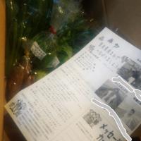 自然派の野菜セット