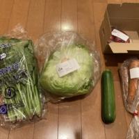 畑まるごと野菜セット・5選+果物
