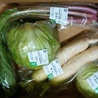 やまぐち・安心野菜B品セット