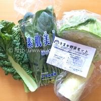 九州のうまか野菜セット 1セット(4品目) (753円)